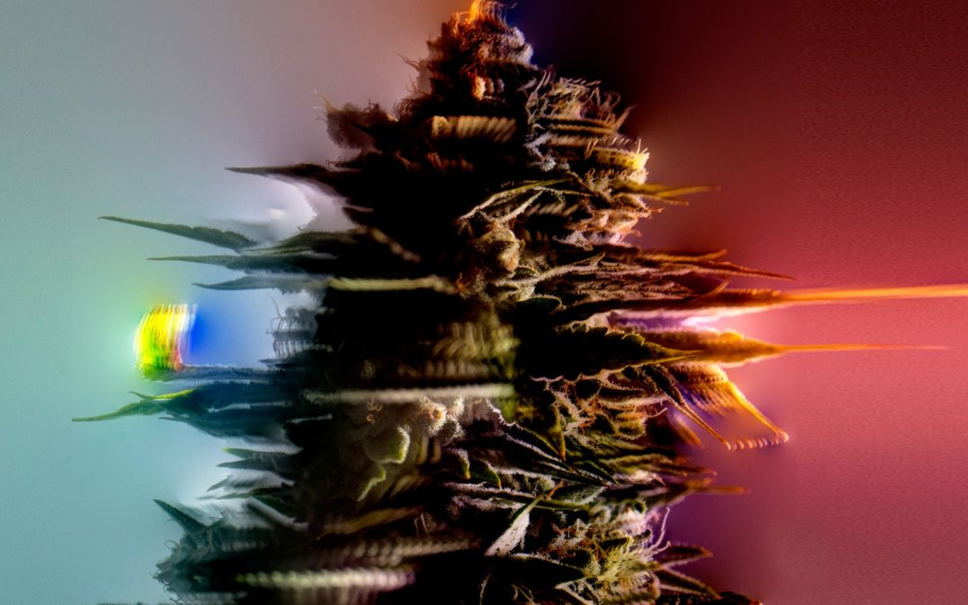 Why I've Never Mixed Weed With Virtual Reality
