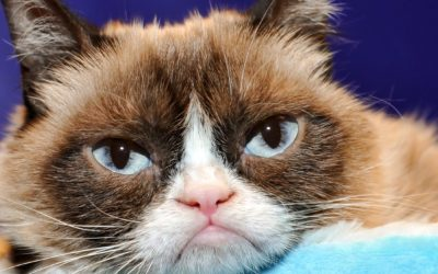 So Long to Grumpy Cat, Amazon's Special Warehouses, and More News
