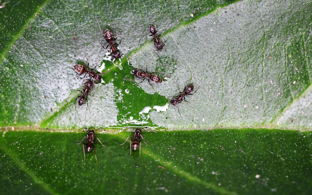 Ants Never Get Stuck in Traffic Jams. Here's Why